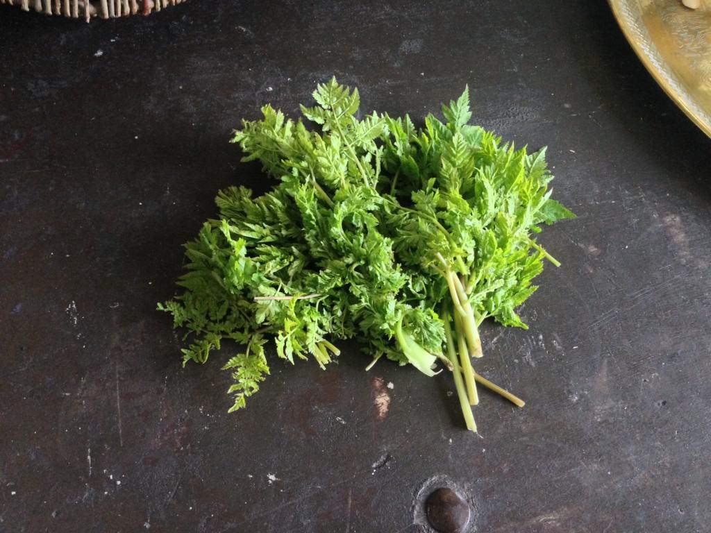 Igen en ukrudtsplante i mange haver. Spansk kørvel har en meget udpræget lakrids/anis-duft, der slet ikke er til at tage fejl af (dufter den ikke af anis, når du plukker den, så lad være med at tage den med hjem, det kan nemlig være skarntyde, du så har fat i og den er meget giftig!). Brug urten hakket i salat for et lakridstwist eller blend den med sukker og drys den på morgenmaden, pandekagerne, som smag i drinks og jeg kunne fortsætte derudaf. Alle de steder hvor lidt lakrids på hverdagen ville være passende.
