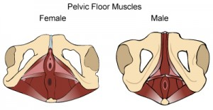 Mandelig og kvindelig bækkenbund